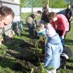 сажаем деревья МБДОУ детский сад с.Каликино Добровского района